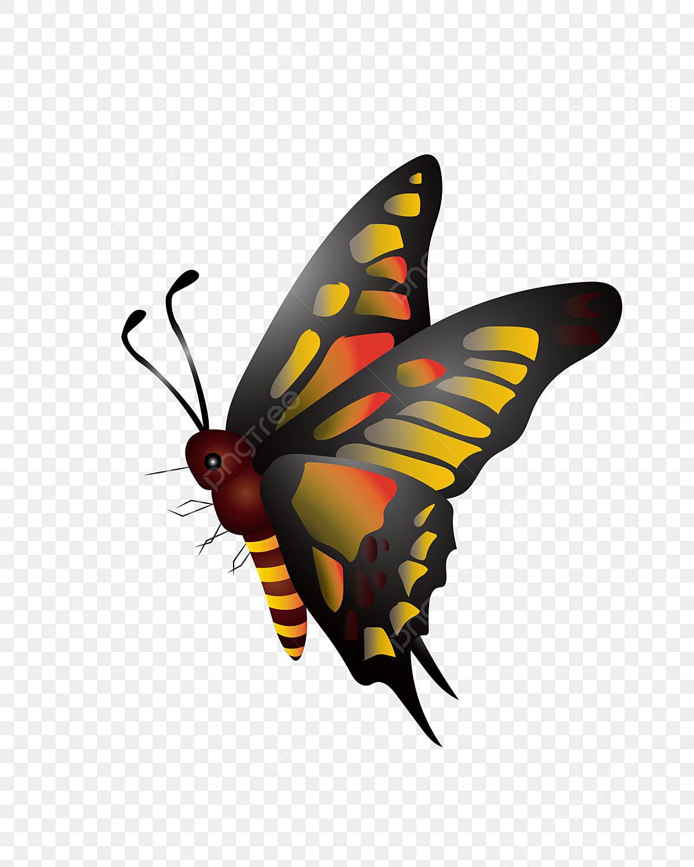 نمط اللون الزهور الفراشة الزرقاء هوائيات يطير مشرق البرتقال جميل أصفر قزم الأخضر الرمادي جميل أجنحة