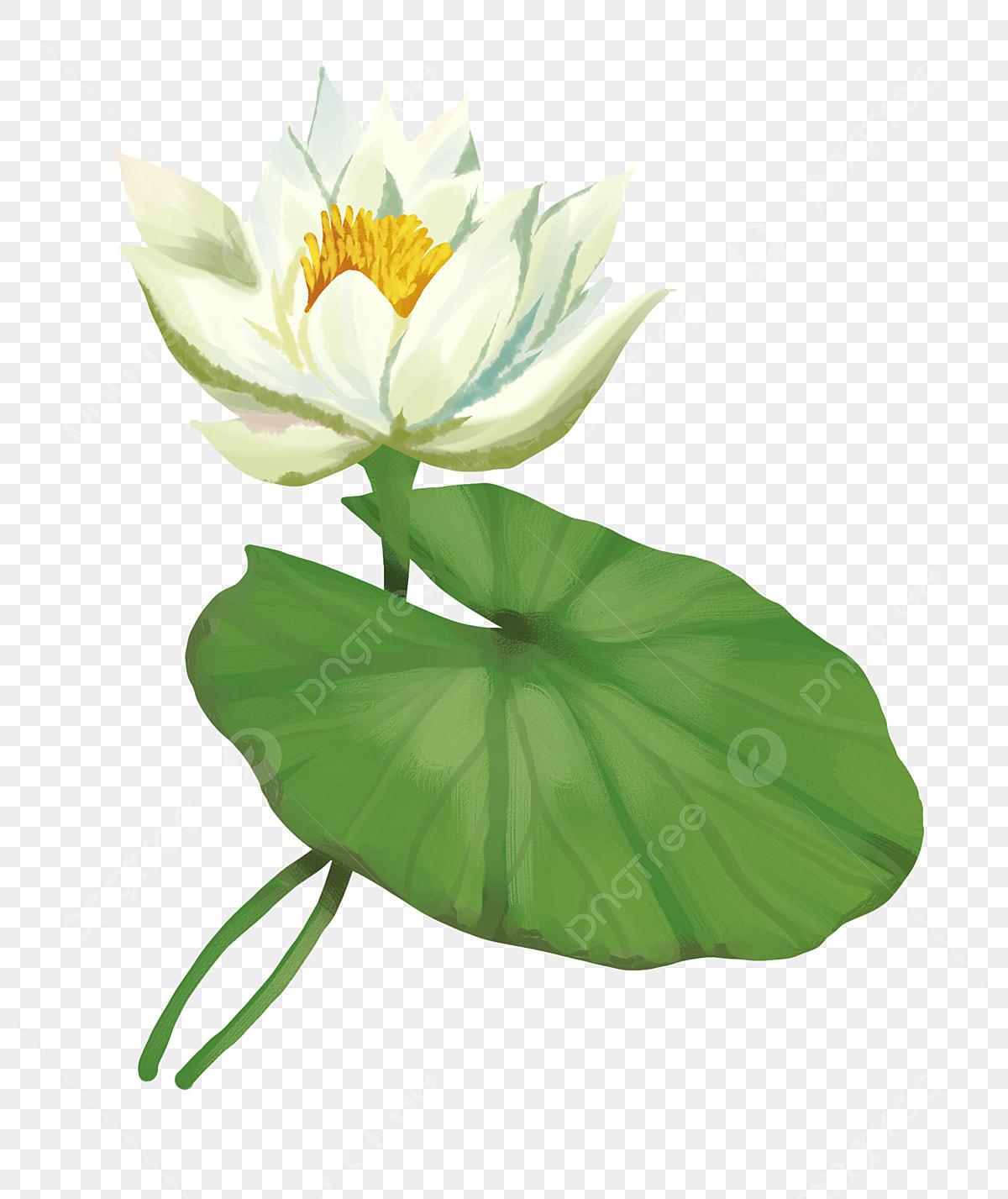 Lotus Blanc Illustration De Dessin Animé Illustration De