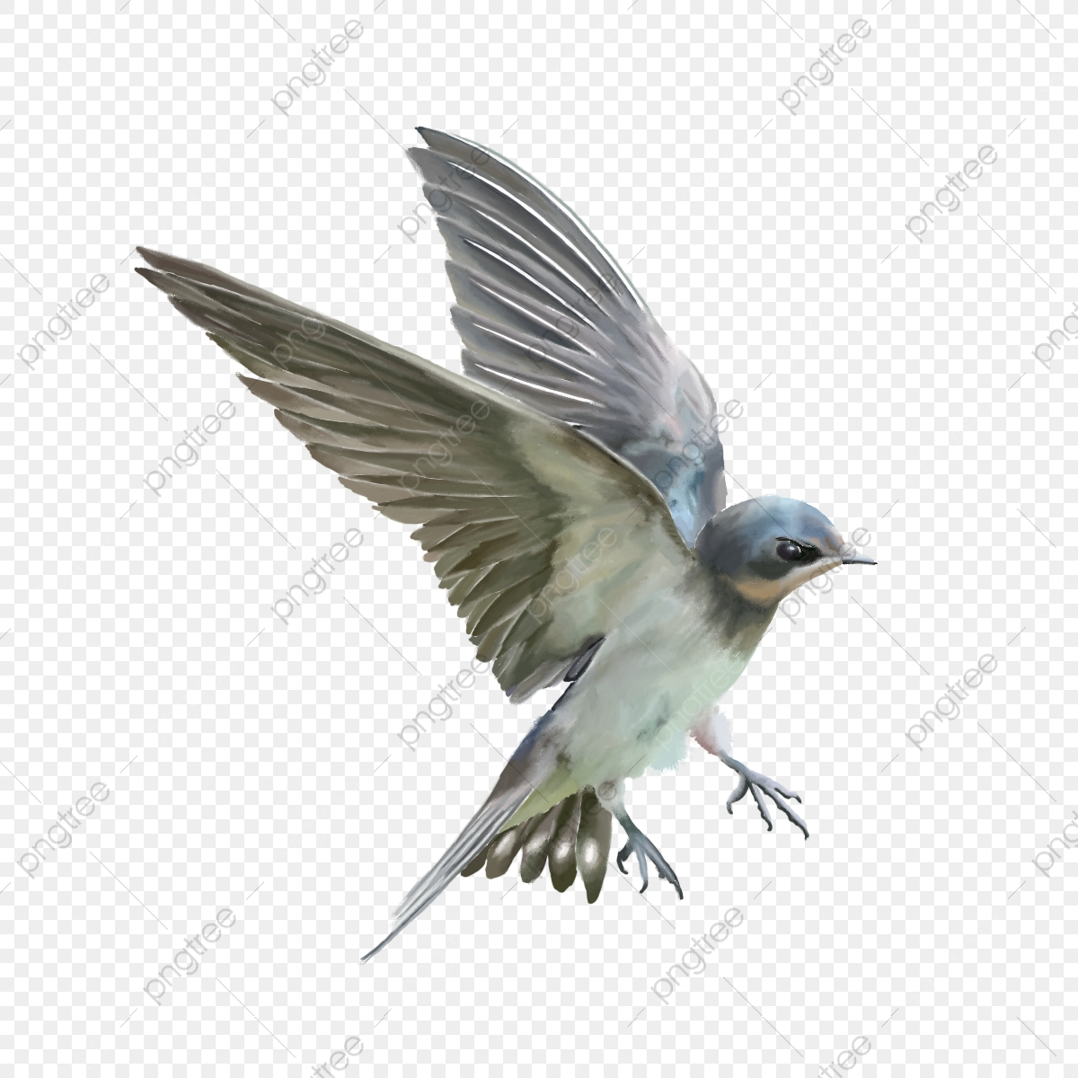 Cute Vivid Flying Bird Cute Bird Flying Bird Bird Png Transparent Clipart Image And Psd File For Free Download