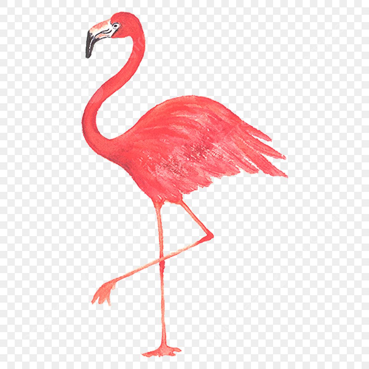 Gambar Burung Flamingo Cat Air Haiwan Zoo Flamingo Cat Air Png Dan Psd Untuk Muat Turun Percuma