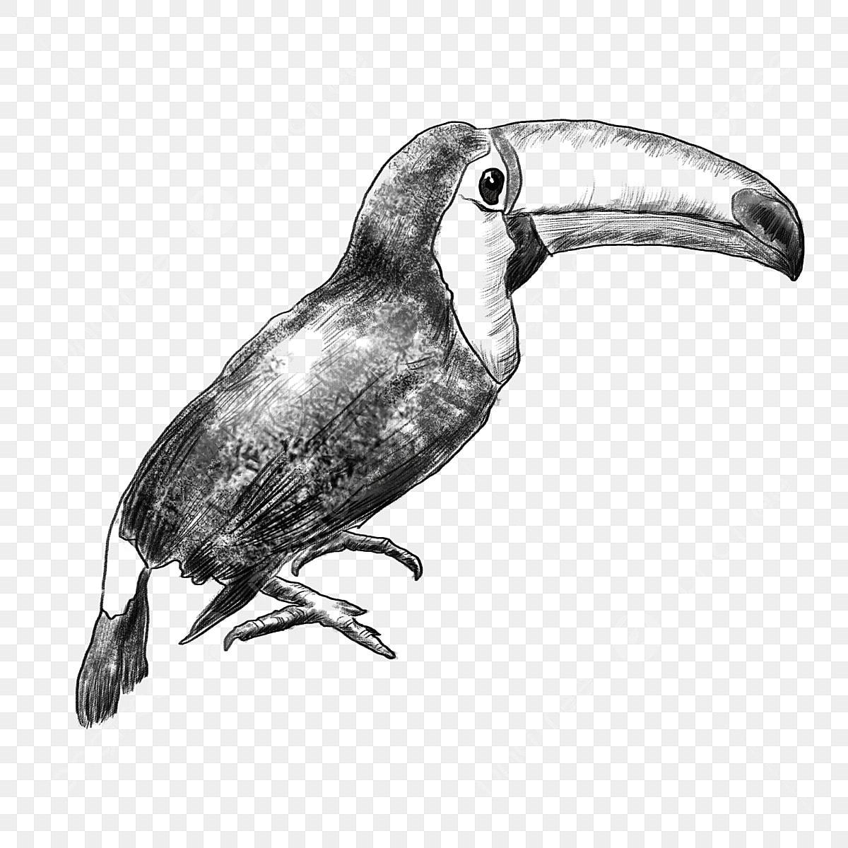 Dessin Au Trait Noir Et Blanc Oiseau Oiseau éléments