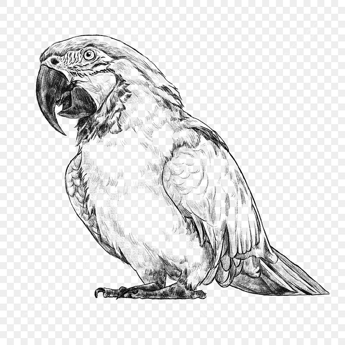 Dessin Au Trait Noir Et Blanc Croquis Oiseau Oiseau Tropical