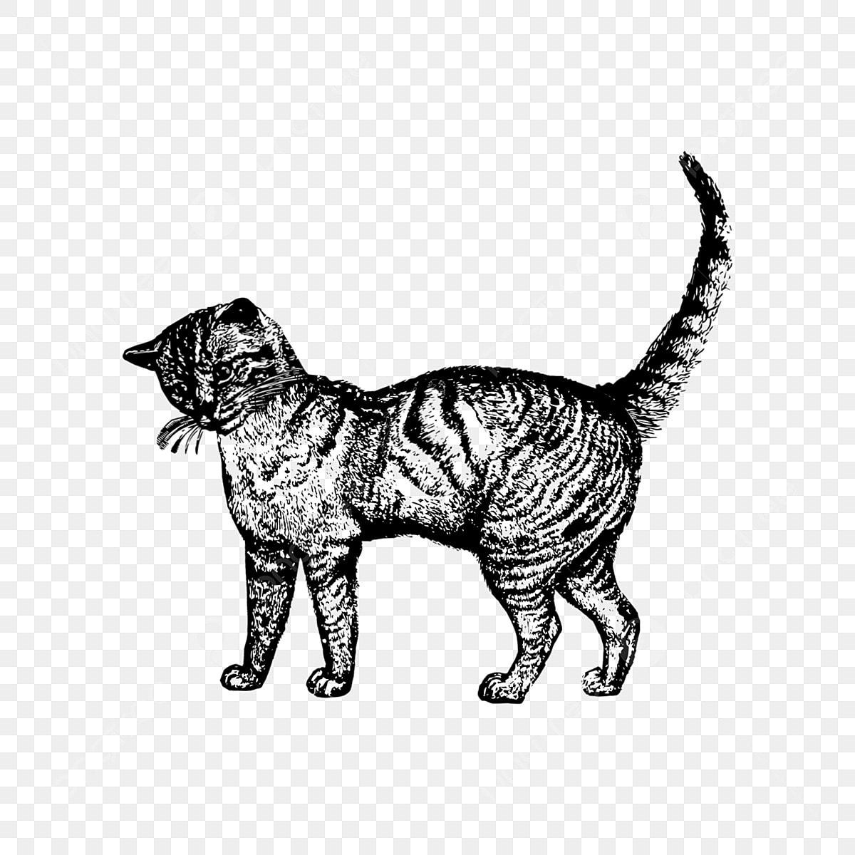 Gambar Sketsa Hitam Tangan Yang Disediakan Oleh Elemen Kucing Dewasa Kucing Kucing Anak Kucing Png Dan Psd Untuk Muat Turun Percuma