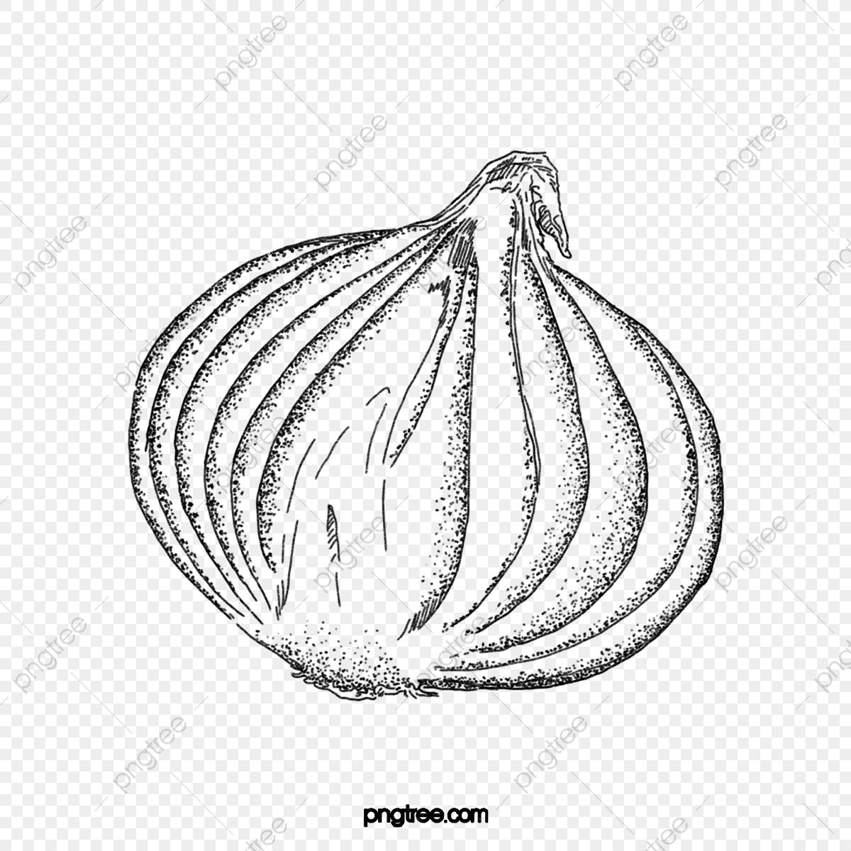 Black And White Flower 541*800 transprent Png Free Download - Black And  White , Plant, Line Art. - CleanPNG / KissPNG