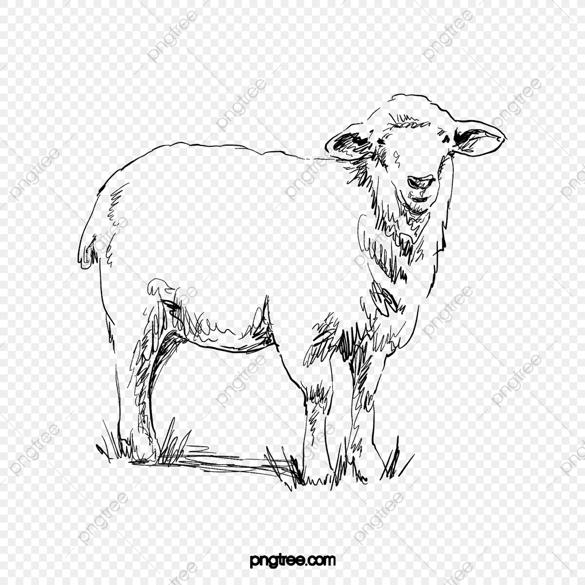 Black Line Drawing Animal Sheep Element Animal Sheep Element Png Transparent Clipart Image And Psd File For Free Download