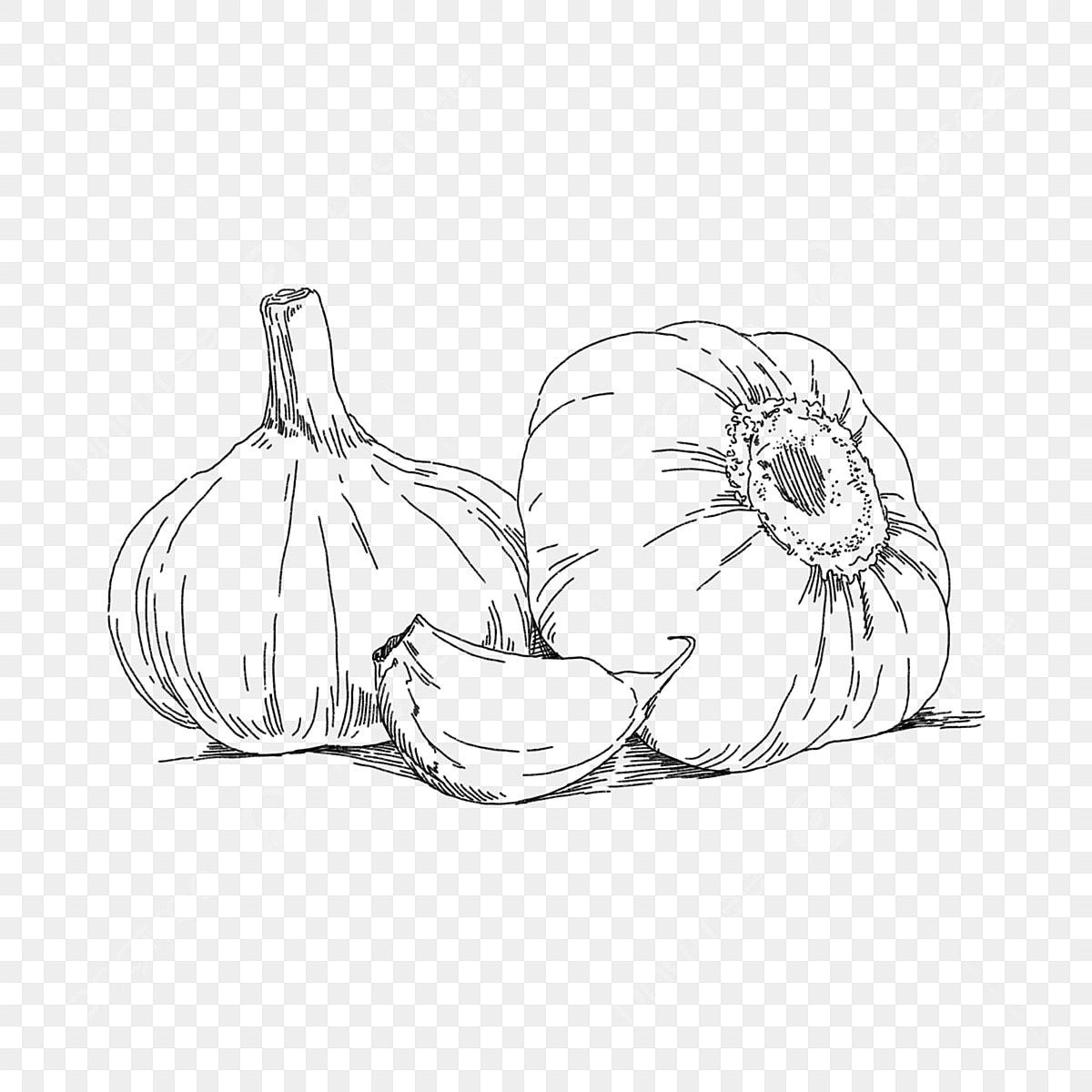Gambar Garisan Hitam Bawang Putih Sayur Sayuran Makanan Hitam Lukisan Garis Dilukis Dengan Tangan Png Dan Psd Untuk Muat Turun Percuma