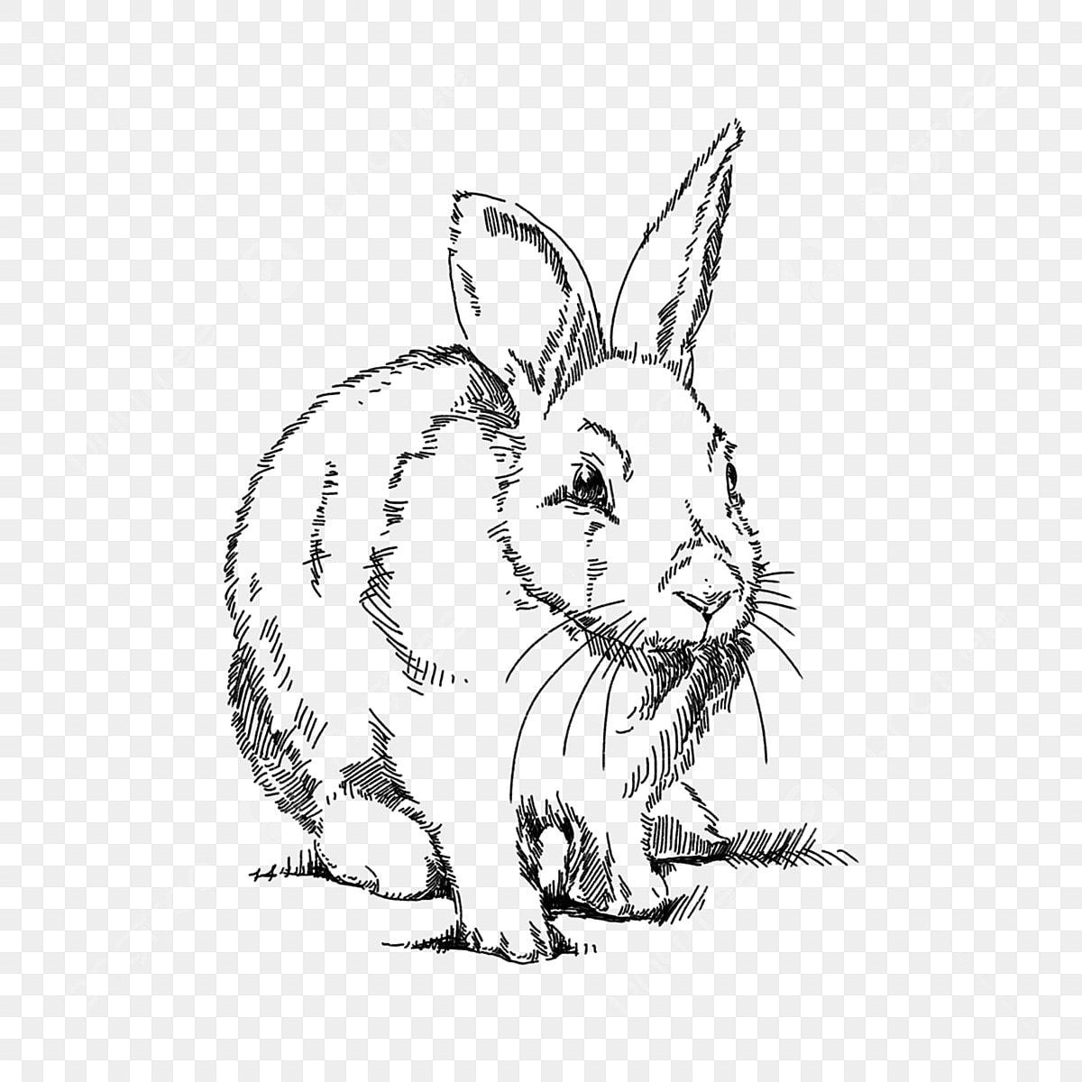 Gambar Lukisan Tangan Berwarna Hitam Putih Menggambar Arnab Haiwan Ayam Bunny Png Dan Psd Untuk Muat Turun Percuma