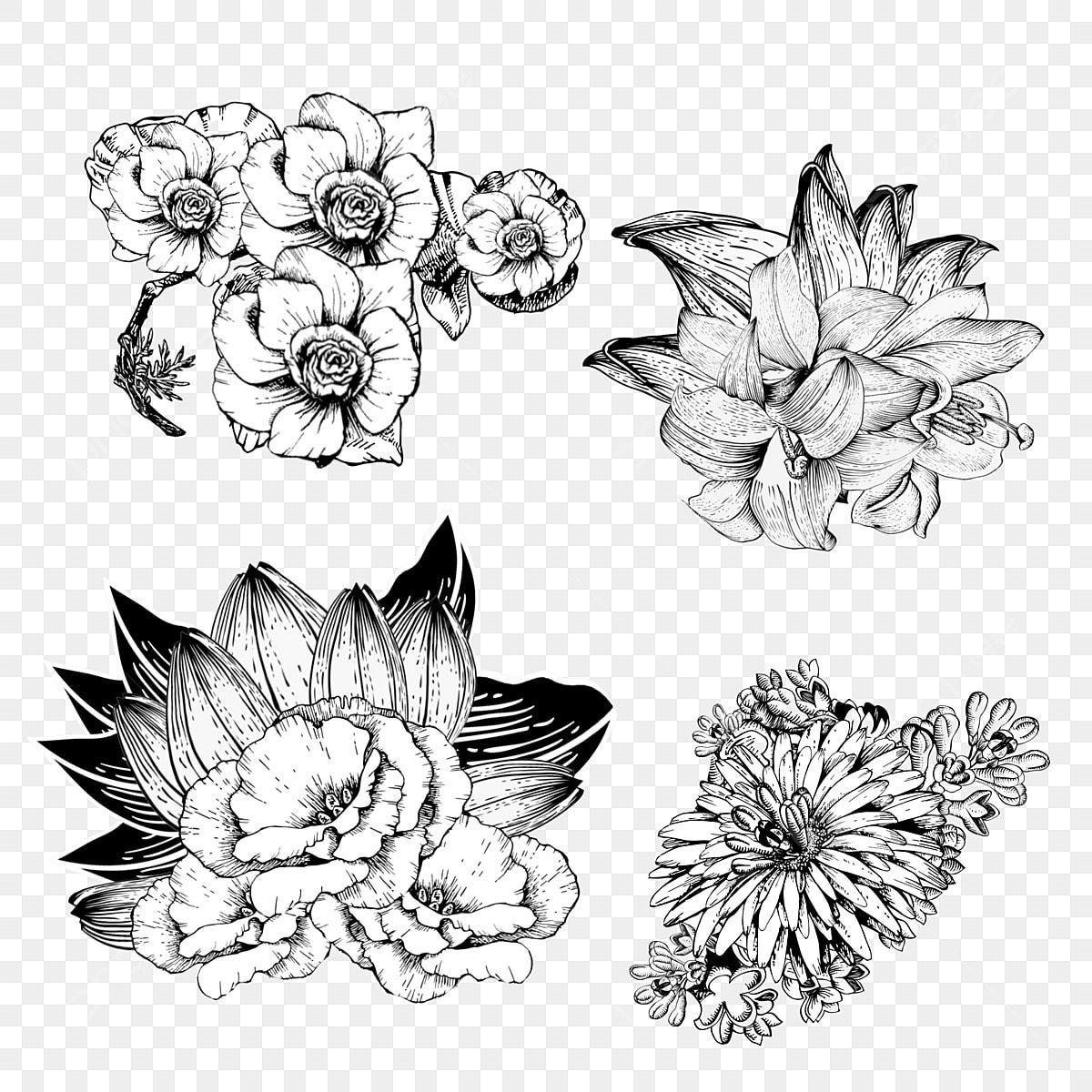 Fleur Ligne Dessin Noir Et Blanc Ligne Dessin Grappe De