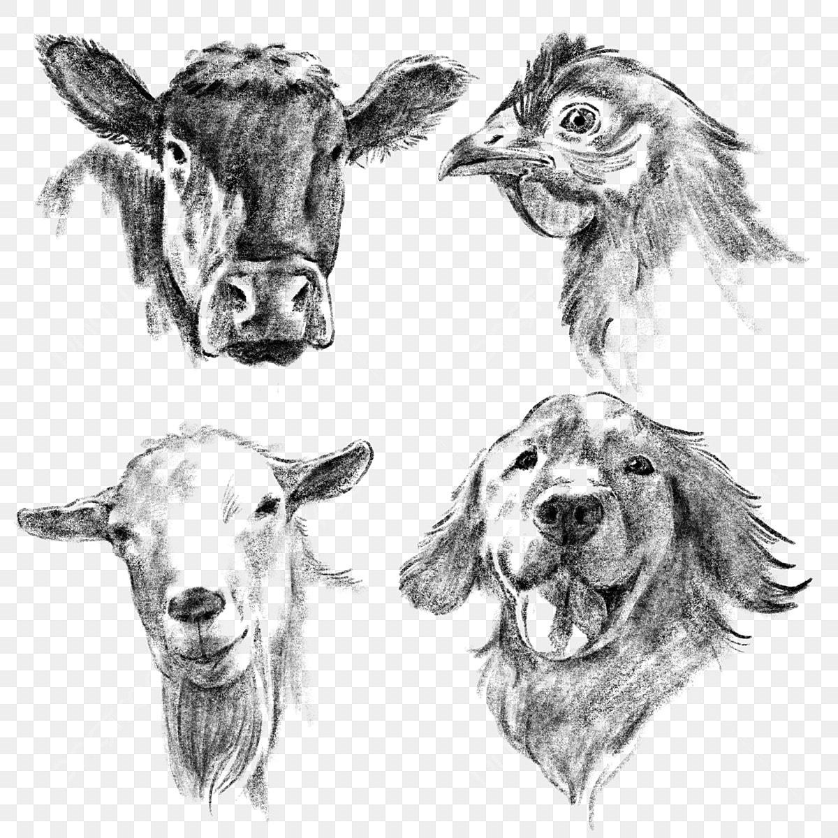 Tangan Ditarik Lakaran Gambar Hewan Ternak Ladang Haiwan