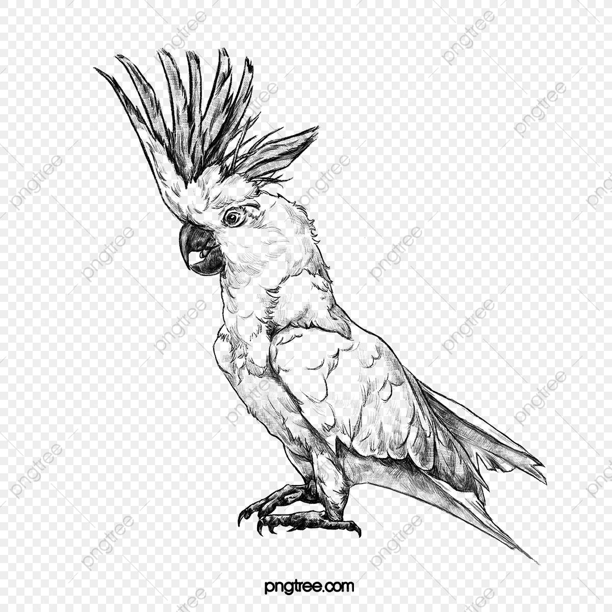 Croquis Oiseau Noir Et Blanc Dessin Au Trait Oiseau Animal