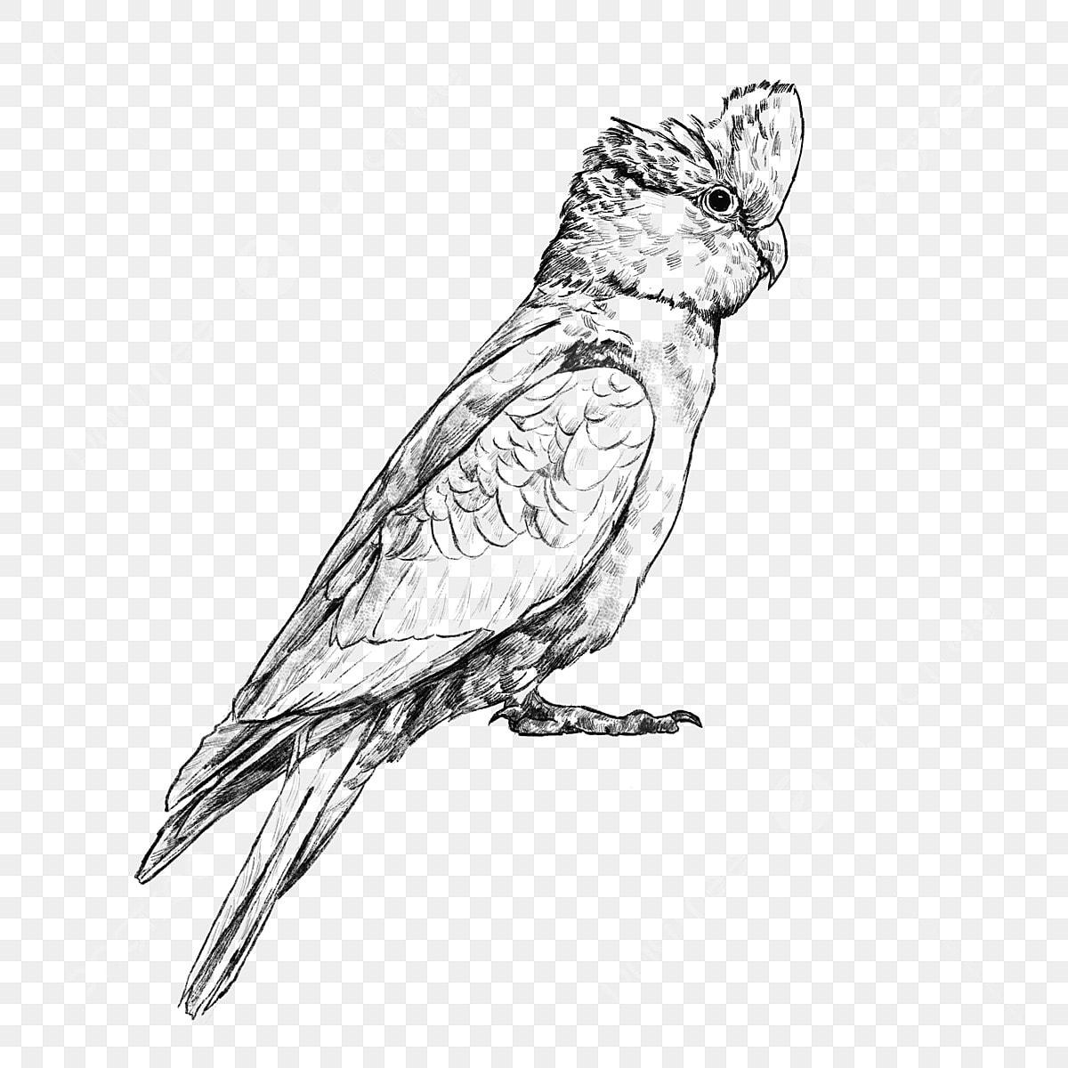 Oiseau Tropical Esquisse Des éléments En Noir Et Blanc