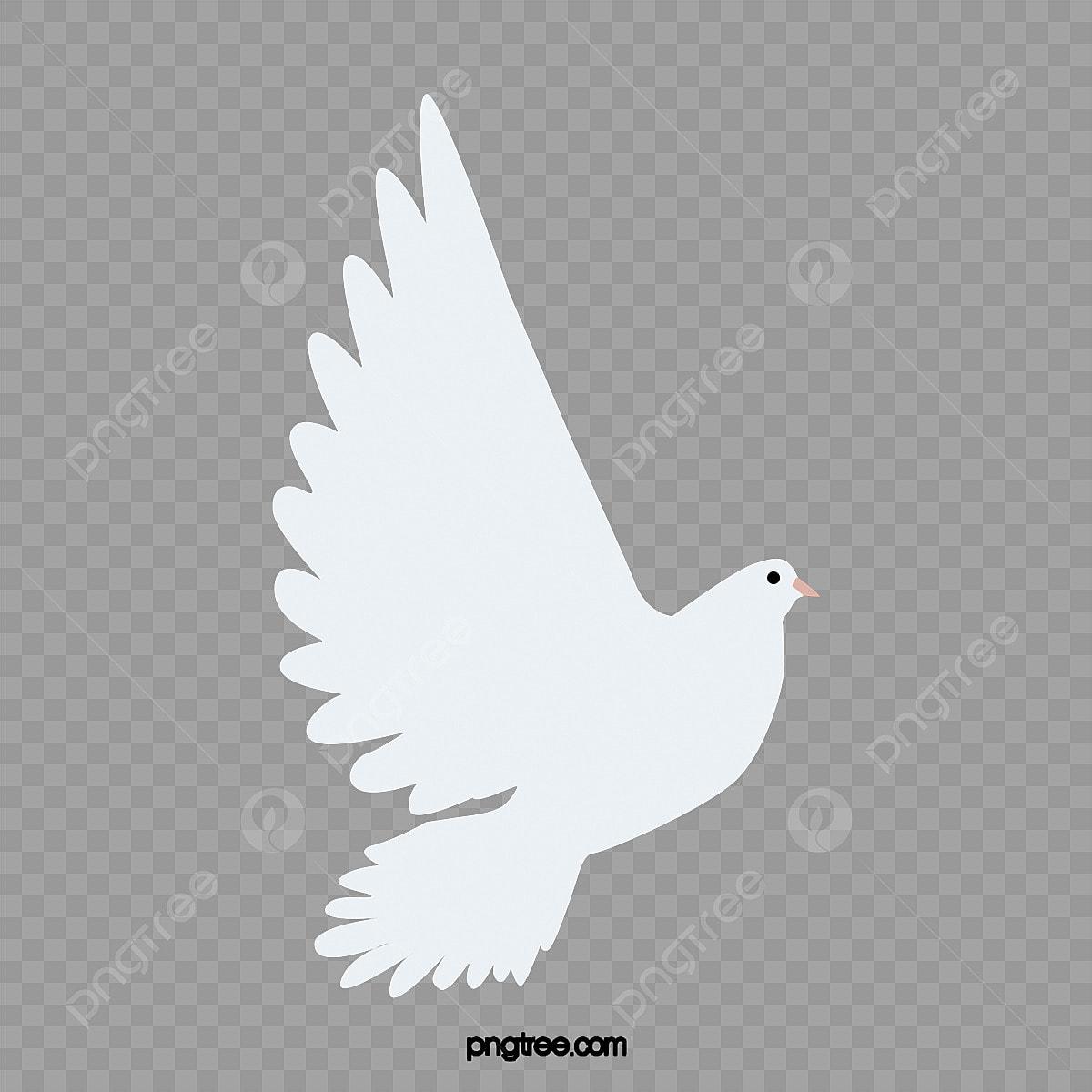 Burung Merpati Putih Terbang Putih Dove Lebarkan Sayap Dan