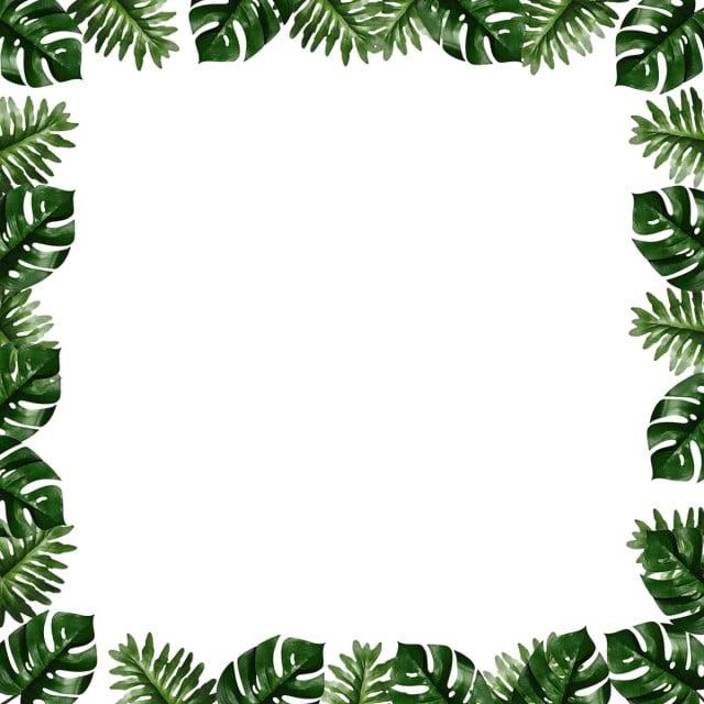bingkai tanaman perbatasan tropis monroe berbatasan pemasaran transparan png transparan gambar clipart dan file psd untuk unduh gratis bingkai tanaman perbatasan tropis