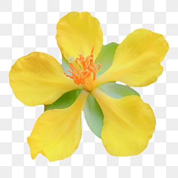 Yellow Flower Png Images Vector And Psd Files Free Download On