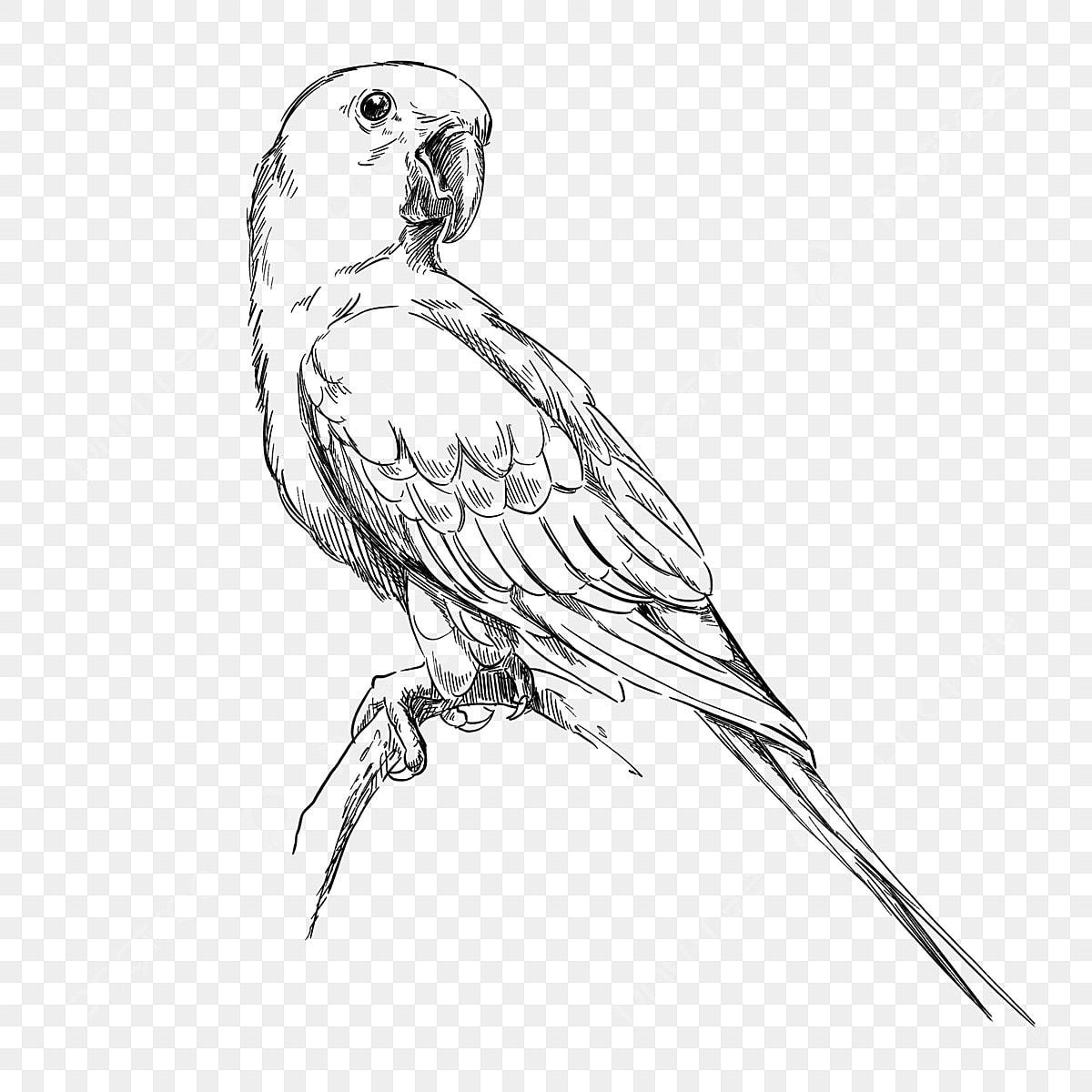 Elément De Dessin Au Trait Perroquet Oiseau Tropical Noir