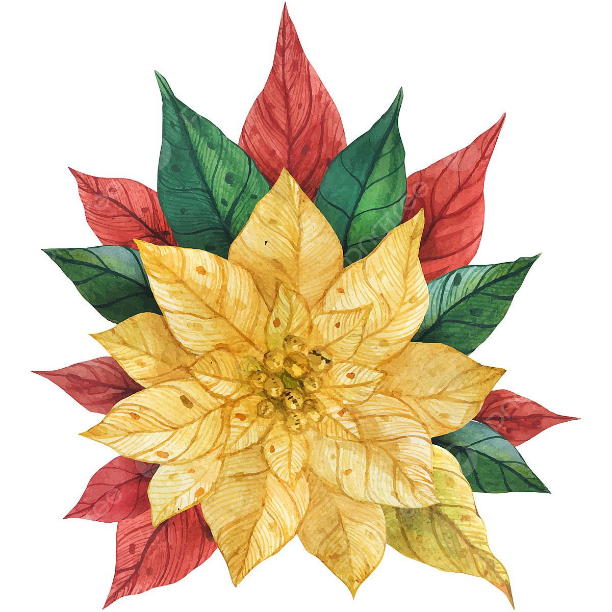 Poinsettia Clip Art, Transparent PNG Clipart Images Free Download -  ClipartMax