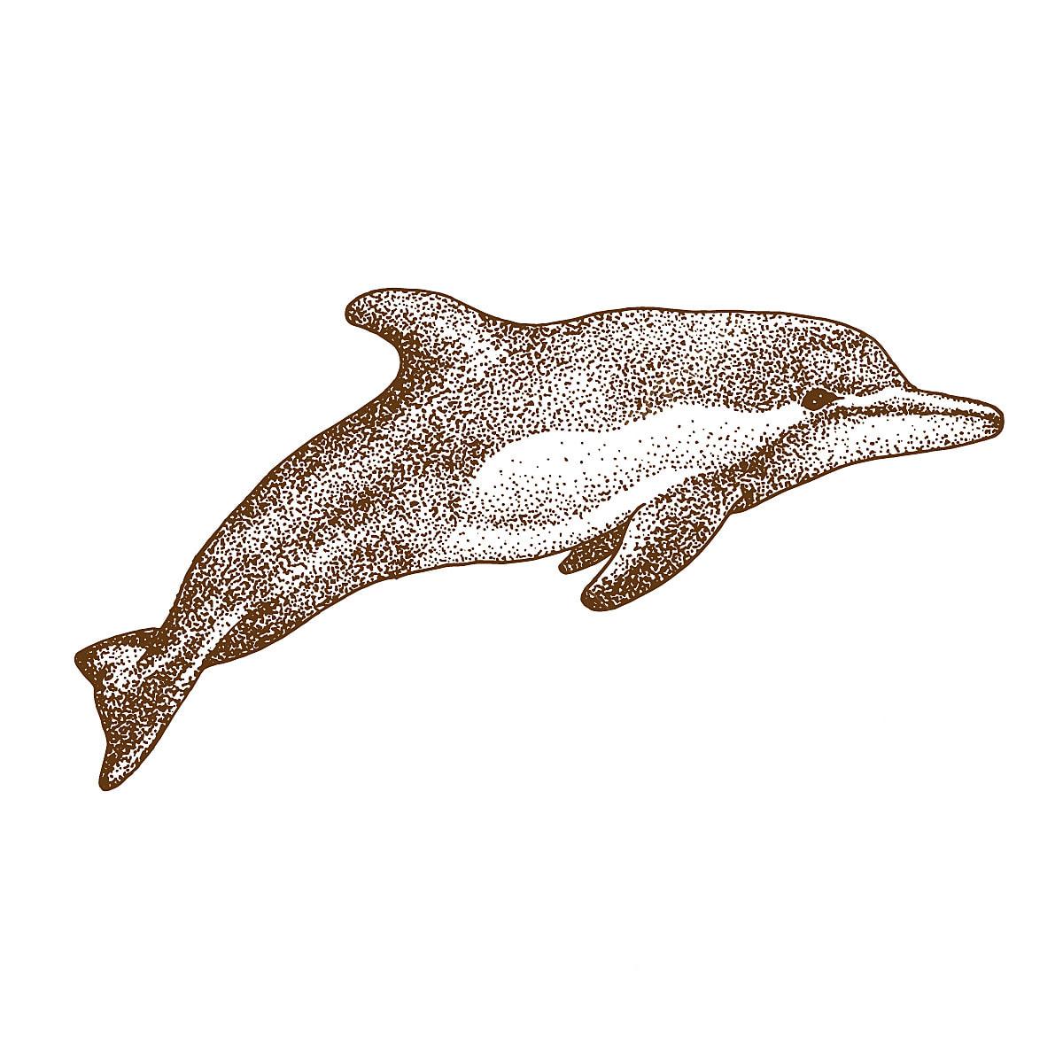Pontilhismo Desenho De Golfinho Animal Aquatic Arte Png E Vetor