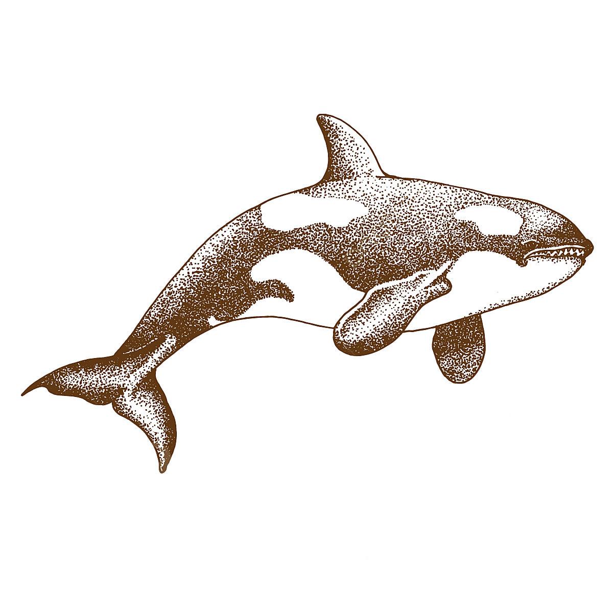 Pontilhismo Desenho De Baleia Animal Aquatic Azul Png E Vetor