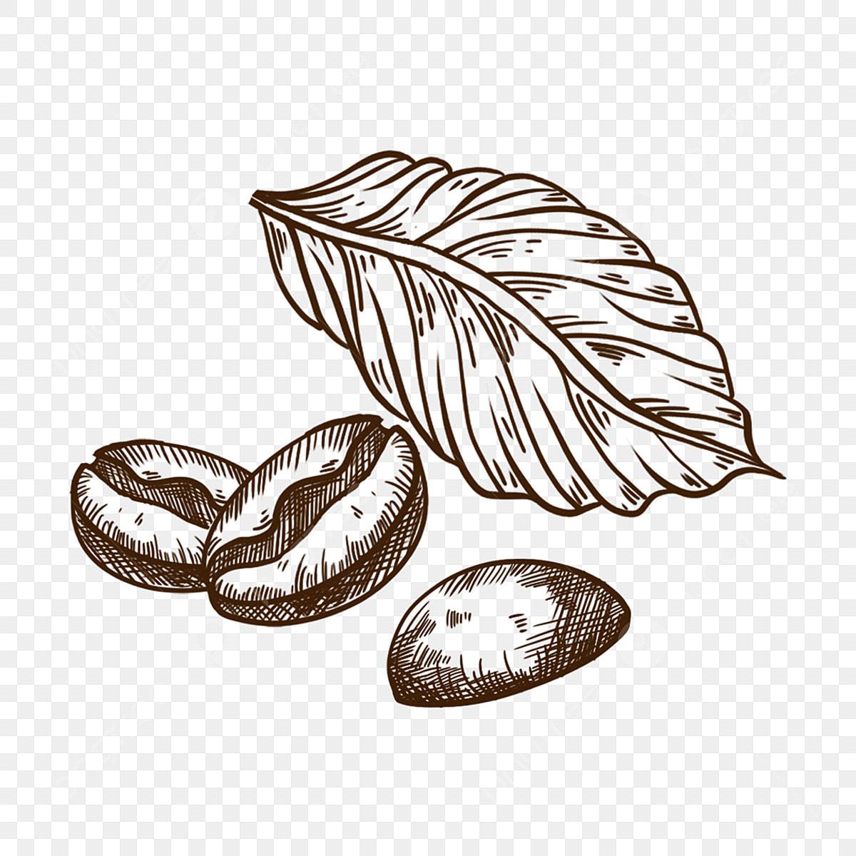 Elemento De Ilustracao De Grao De Cafe De Desenho De Linha Preto E