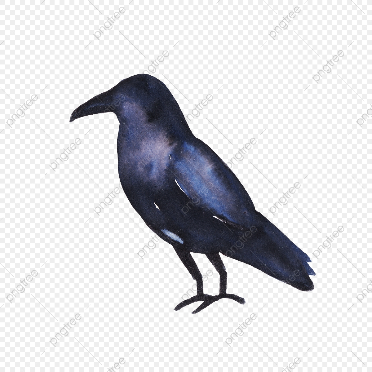 Crow Silhouette Watercolor Horror Spooky Corpse Png Transparent Clipart Image And Psd File For Free Download Learn how to import images, change the colour balance, use hue and saturation, use layer masks and select objects using a variety of selection tools. https pngtree com freepng crow silhouette watercolor 5194465 html