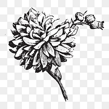 Flower Line Drawing Png Images Vector And Psd Files Free Download On Pngtree