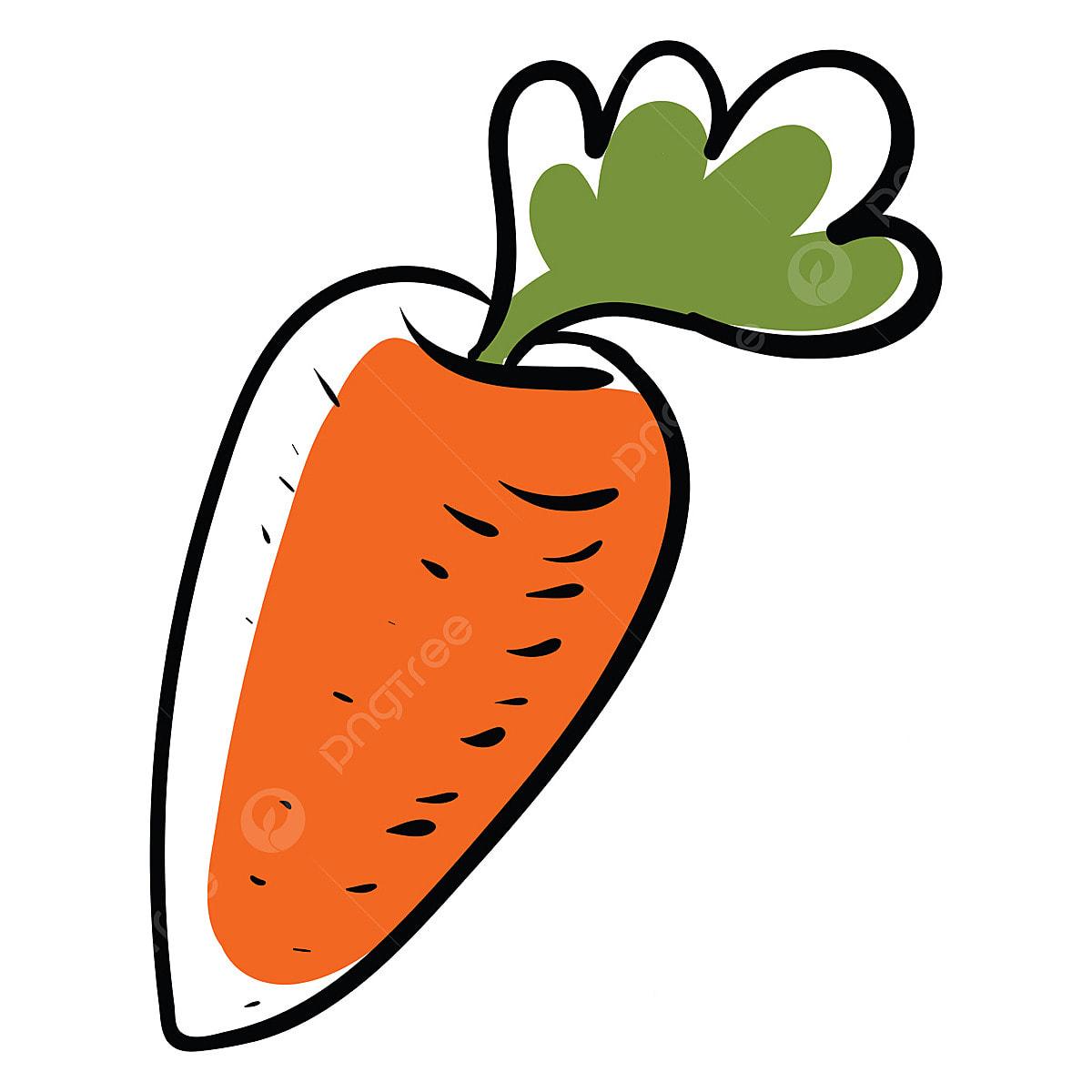 Zanahoria Dibujo Png Vectores Psd E Clipart Para Descarga Gratuita Pngtree También era tiempo de que comenzara y terminara un dibujo en un periodo de 2 días ;w https es pngtree com freepng carrot drawing illustration vector on white background 5293460 html