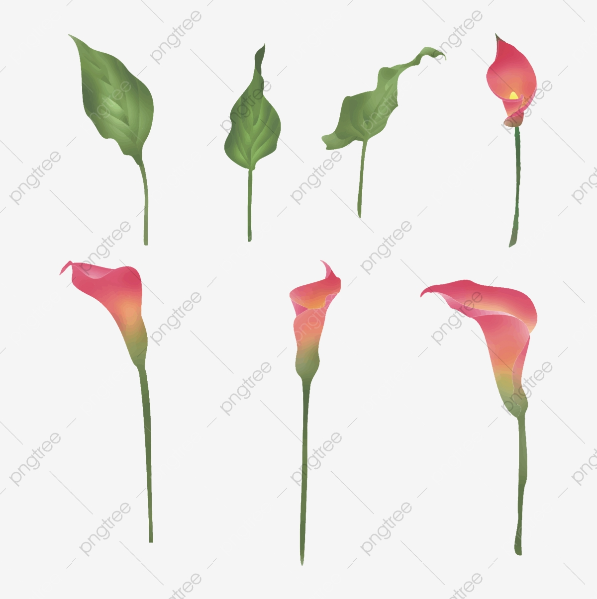 How to make paper Calla Lily flower, FREE template | 1205x1200