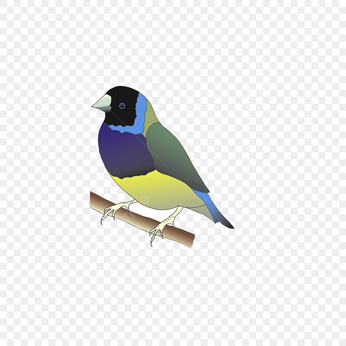 Pinson Oiseau Clipart Le Bec Sauvage La Nature Fichier Png Et Psd Pour Le Telechargement Libre