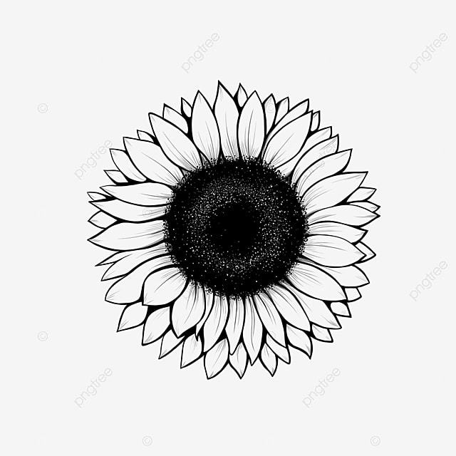 Lineart Sunflower Drawing Drawing Icons Sunflower Icons Flower Png Transparent Clipart Image And Psd File For Free Download
