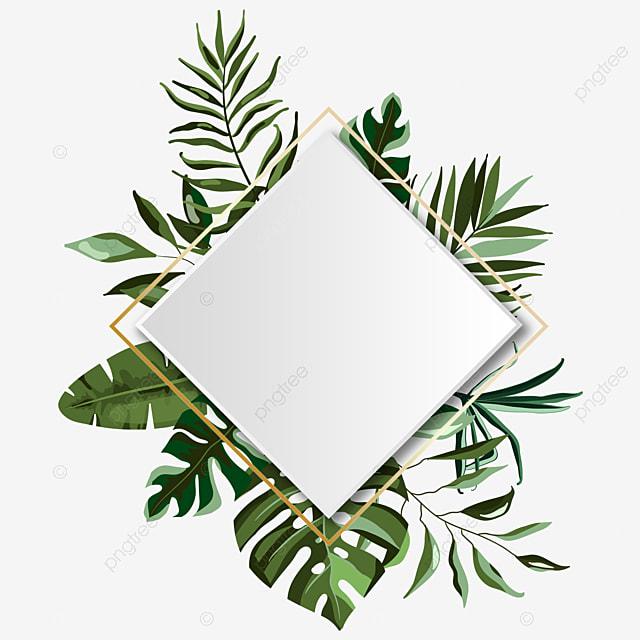 bingkai musim panas tropis daun hijau hijau daun kotak png transparan gambar clipart dan file psd untuk unduh gratis bingkai musim panas tropis daun hijau