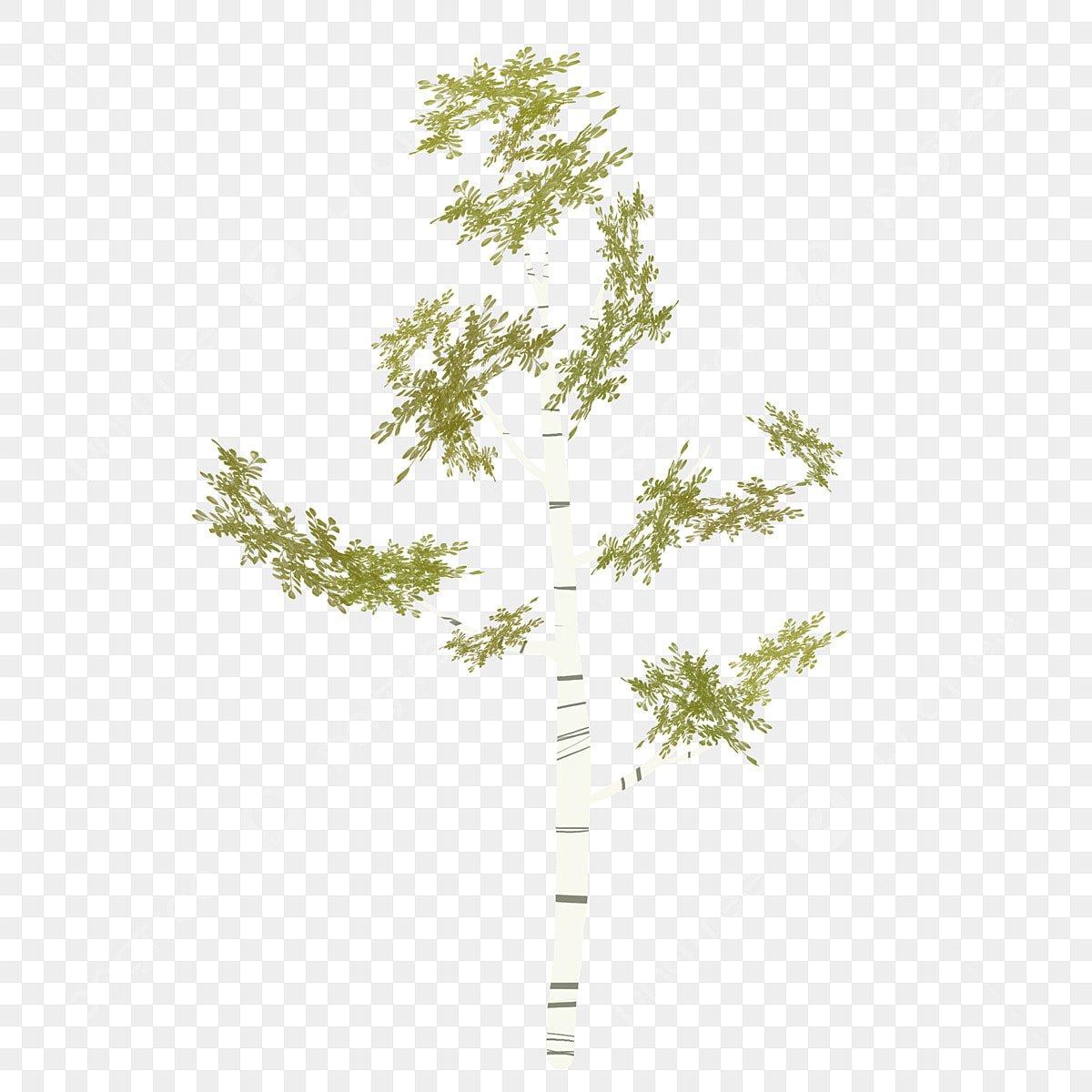 Веточка цветущей ветки, цветущая вишня, лист, ветка, растение ... | 1200x1200