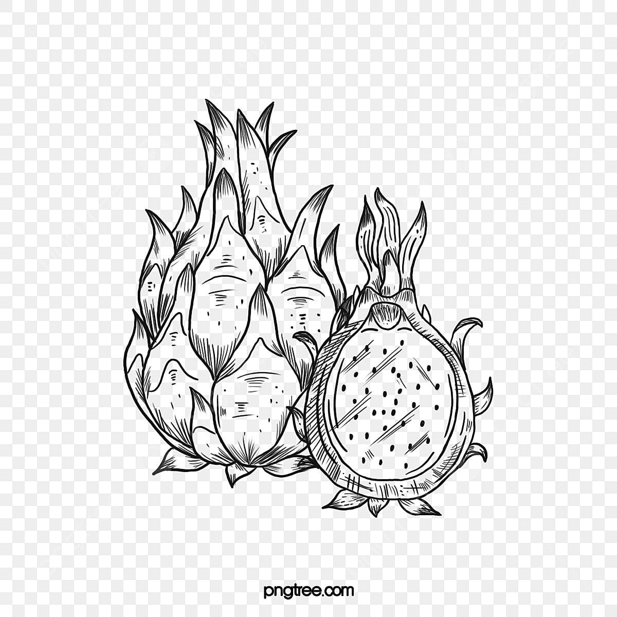 Garis Buah Naga Menggambar Ilustrasi Kartun Buah Musiman Gambar Garis Buah Naga Ilustrasi Kartun Png Transparan Gambar Clipart Dan File Psd Untuk Unduh Gratis