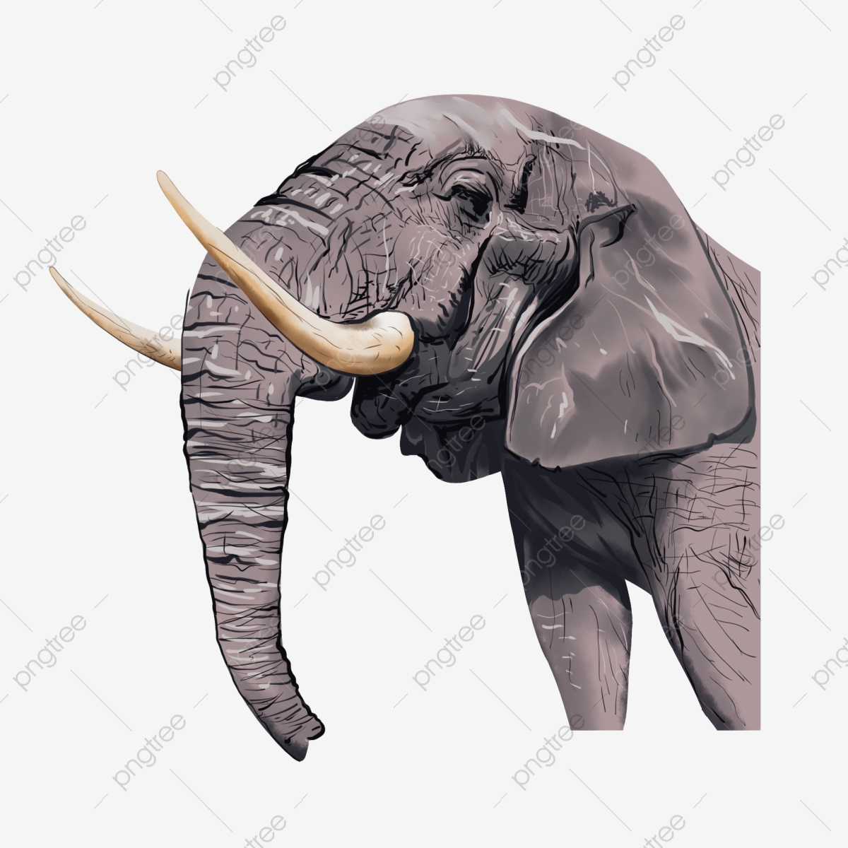 Ivory Png Images Vector And Psd Files Free Download On Pngtree I make this in any color. https pngtree com freepng elephant nose ivory 5403992 html