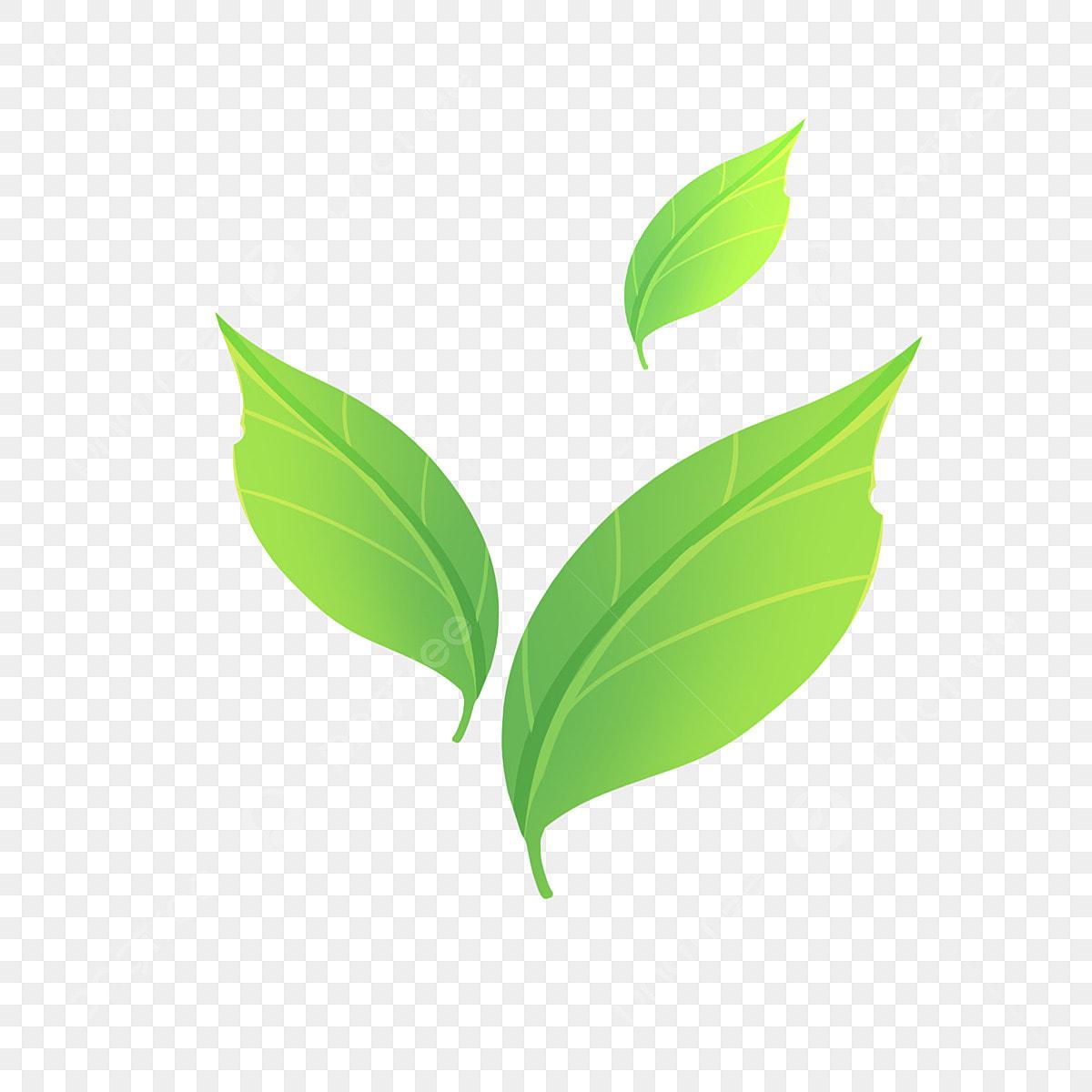 Green leaf illustration, Green tea Leaf Matcha, Green tea leaf transparent  background PNG clipart | HiClipart