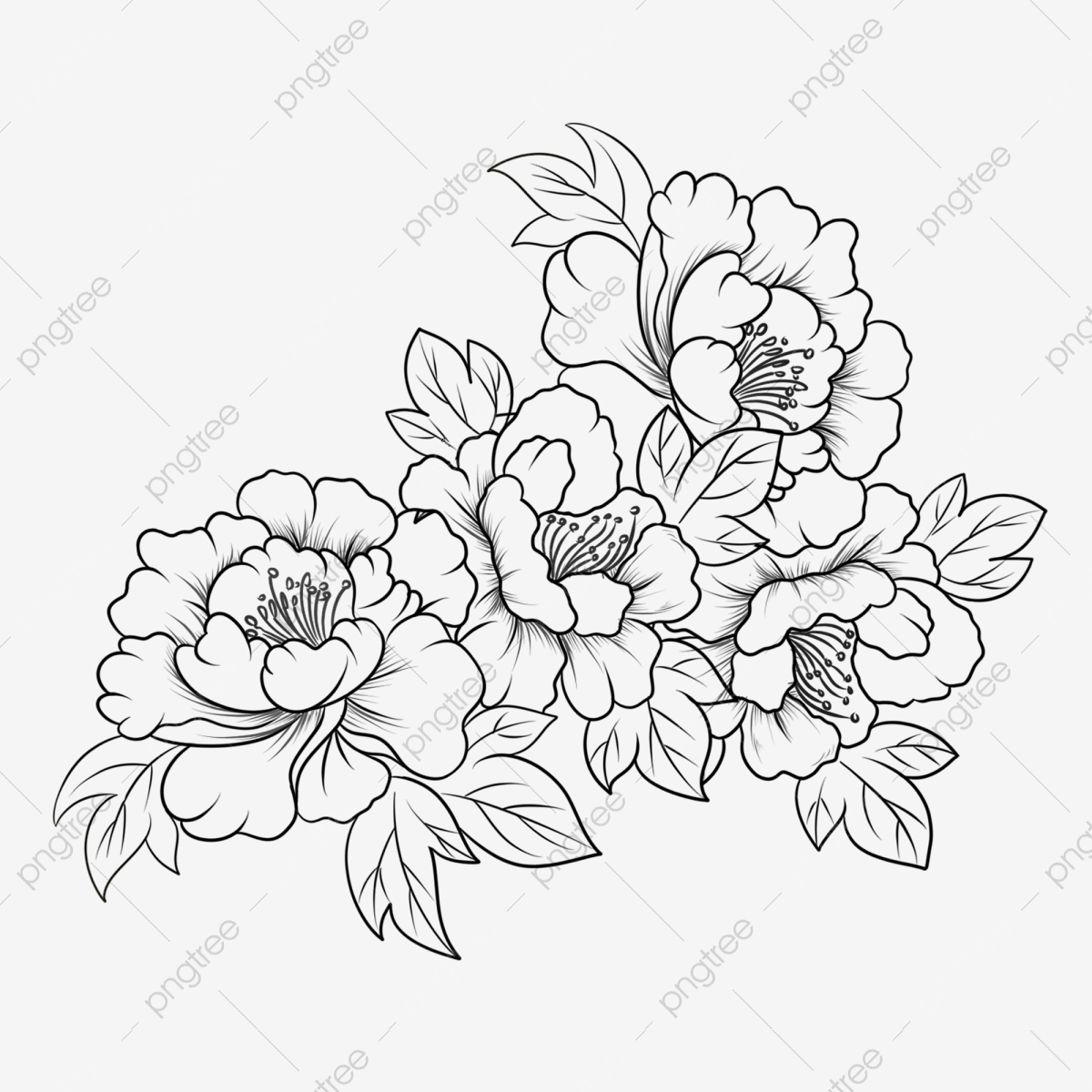 Hand Drawn Line Drawing Peony Flower Clipart Black And White Hand Painted Flowers Peony Png Transparent Clipart Image And Psd File For Free Download