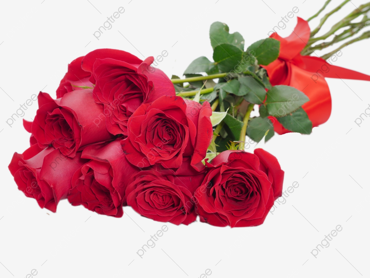 Rose Png Images Vector And Psd Files Free Download On Pngtree