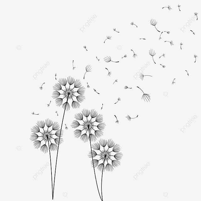 Gambar Gambar Garis Tangan Menggambar Bunga Dandelion Clipart Dandelion Bunga Dandelion Bunga Bunga Png Transparan Clipart Dan File Psd Untuk Unduh Gratis
