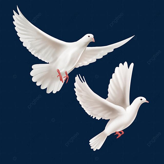 Gambar Dua Burung Merpati Putih Yang Dilukis Dengan Tangan Terbang Tinggi Dua Terbang Tinggi Merpati Png Dan Psd Untuk Muat Turun Percuma