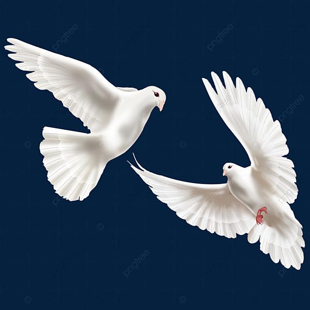 اثنان من حمامتي السلام العالميين البيض حمامة حمامة السلام السلام اليوم Png وملف Psd للتحميل مجانا