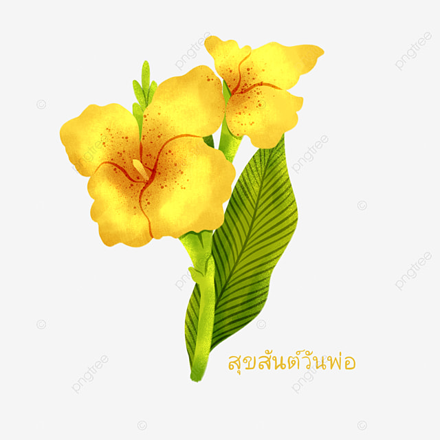 hand drawn thai fathers day yellow canna elements