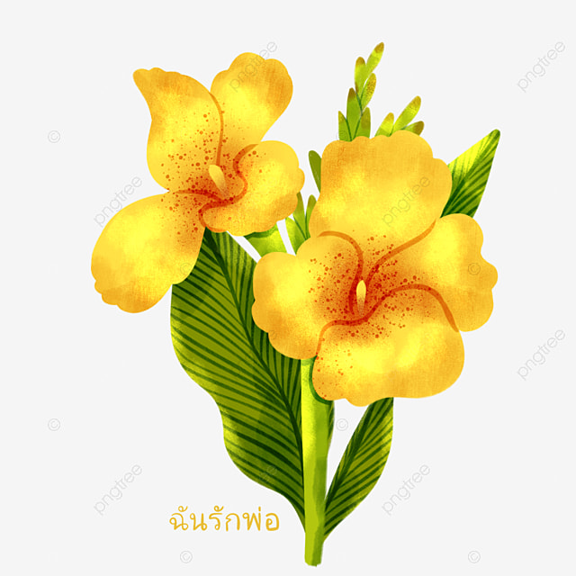 thai fathers day hand painted yellow canna elements