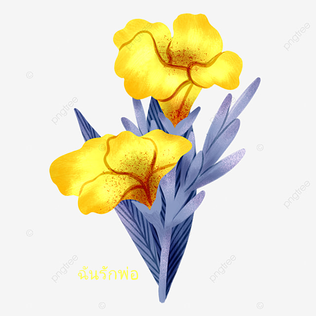 yellow canna elements