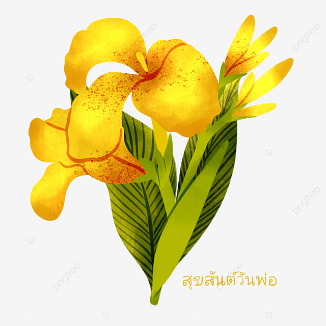 yellow canna floral elements