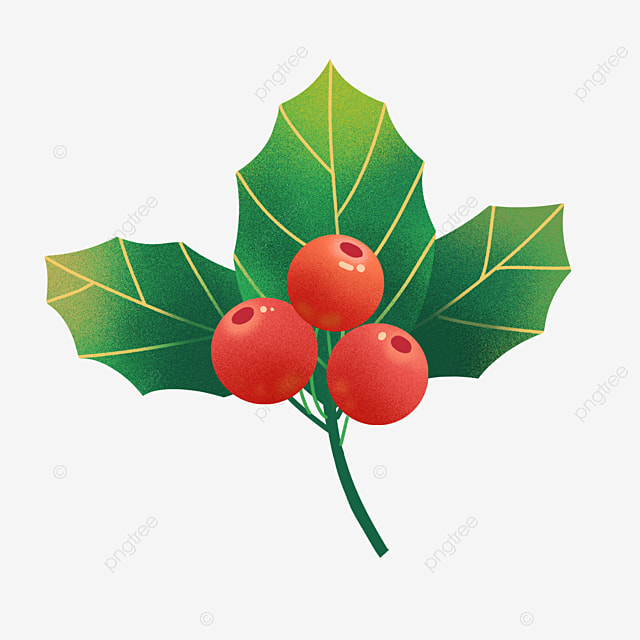 hand drawn christmas christmas fruit holly