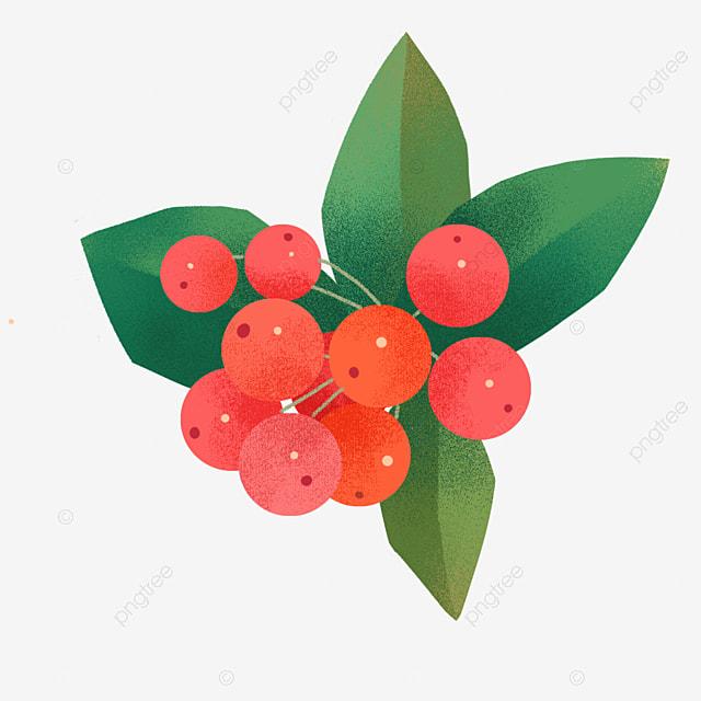 hand drawn christmas plant holly