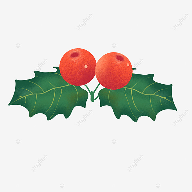 hand drawn realistic christmas fruit holly
