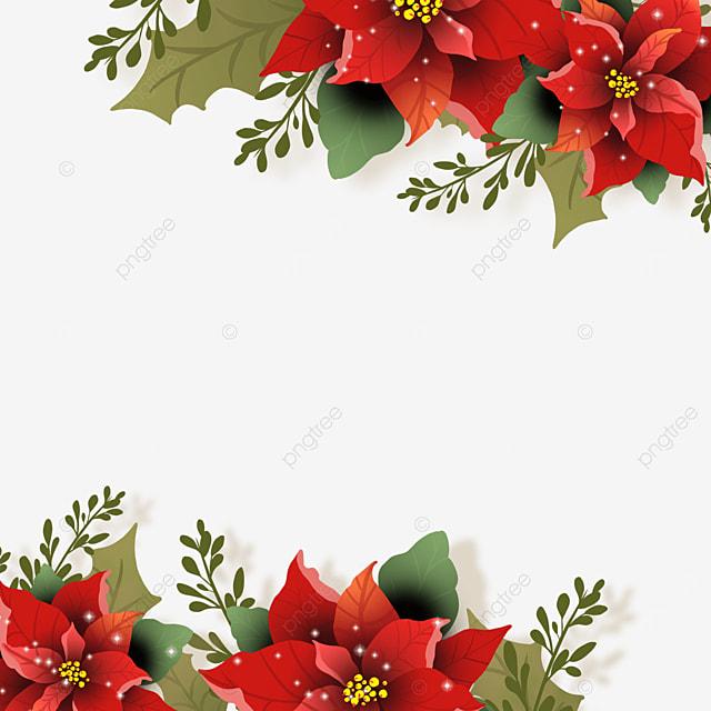 christmas poinsettia poinsettia flower border