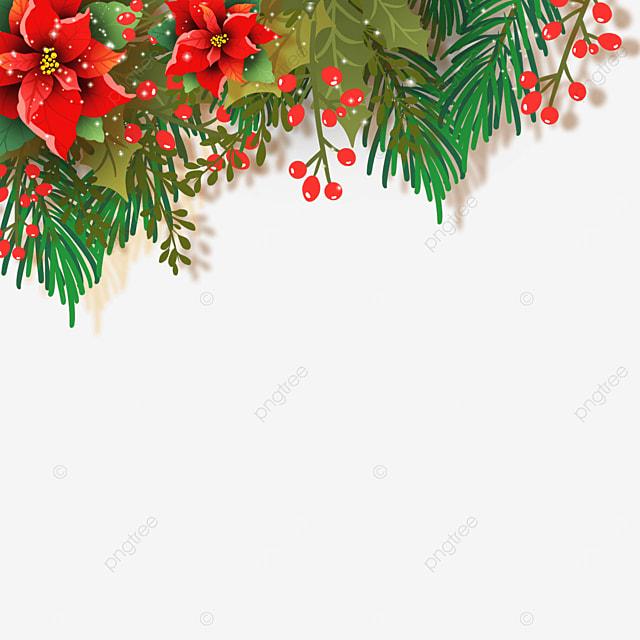 real christmas poinsettia christmas poinsettia flower illustration