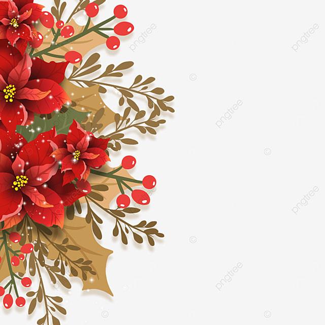 red brown christmas poinsettia christmas poinsettia flower illustration