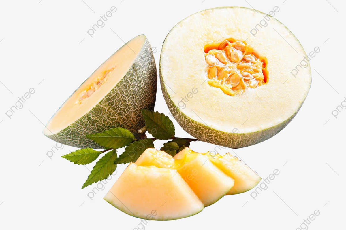 Cantaloupe Png Vector Psd And Clipart With Transparent Background For Free Download Pngtree Honeydew juice cantaloupe galia melon hami melon, cantaloupe, muskmelon png watermelon cantaloupe, watermelon slice, slice watermelon illustration png clipart. https pngtree com freepng cantaloupe 5648115 html